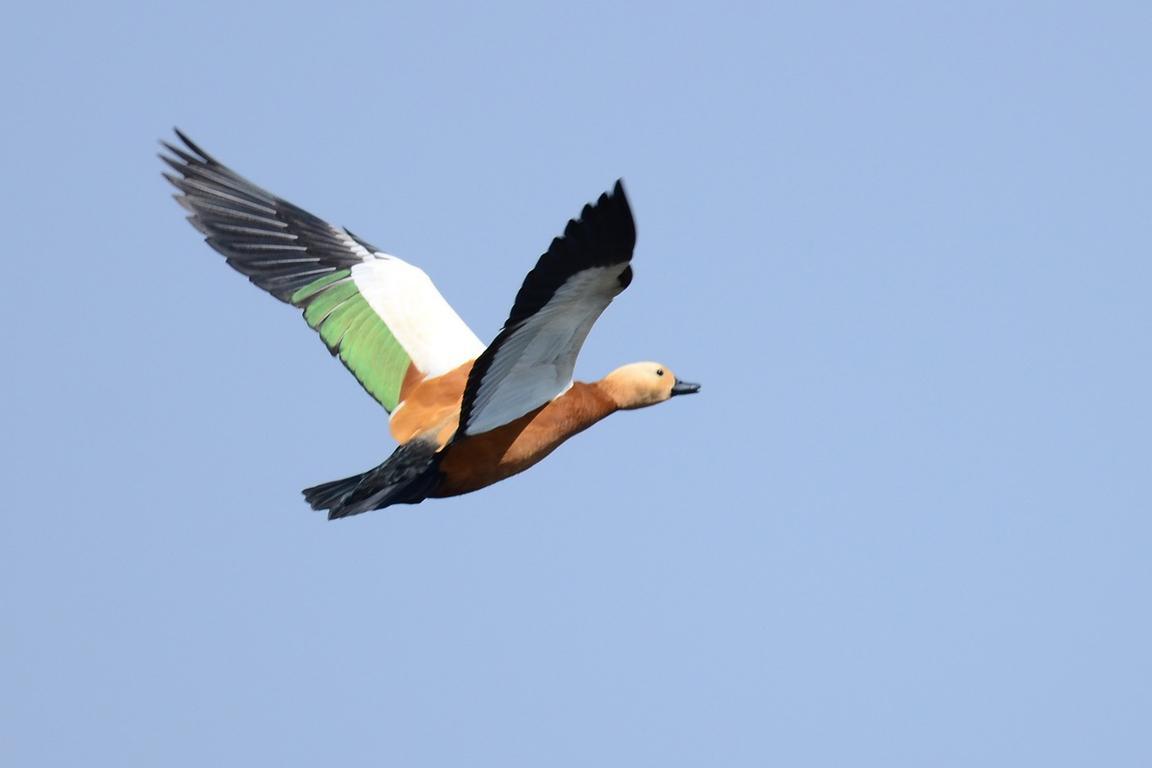 Cadzand-Bad - Tiere in der Luft