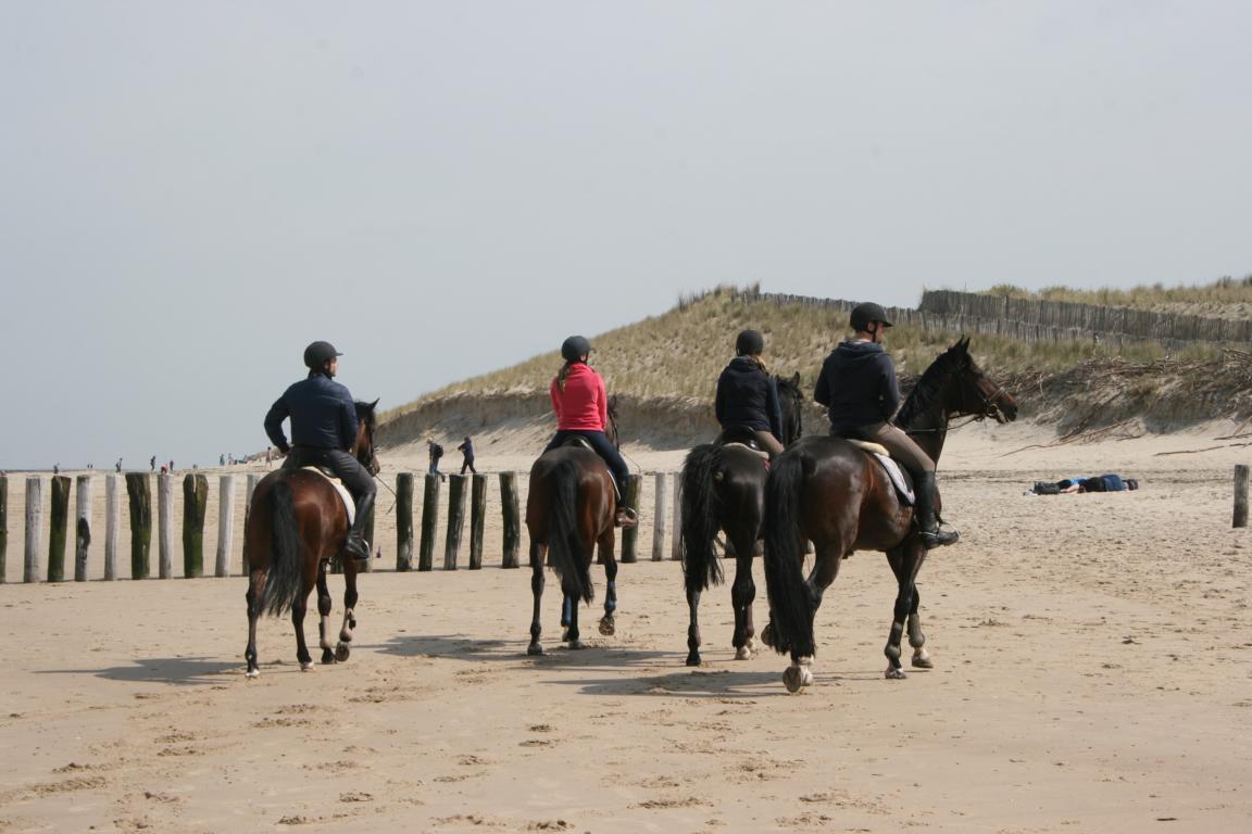 Reiten am Strand mit der ``Manege Hippo dÒr``, Nieuwvliet