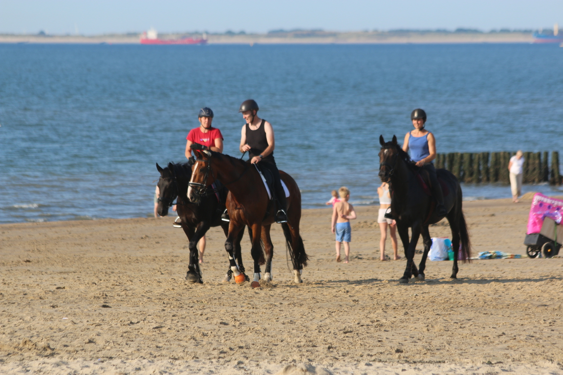 Paardrijden op het strand met de ``Manege Hippo dÒr``, Nieuwvliet